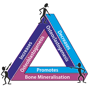 Osteoporosis cycle
